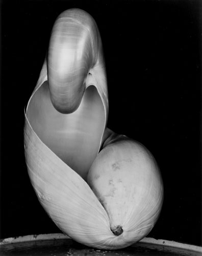 Shell (14S) | Edward Weston 1927