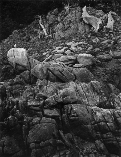 Cliff with Seagull (PL46L2) | Edward Weston 1946