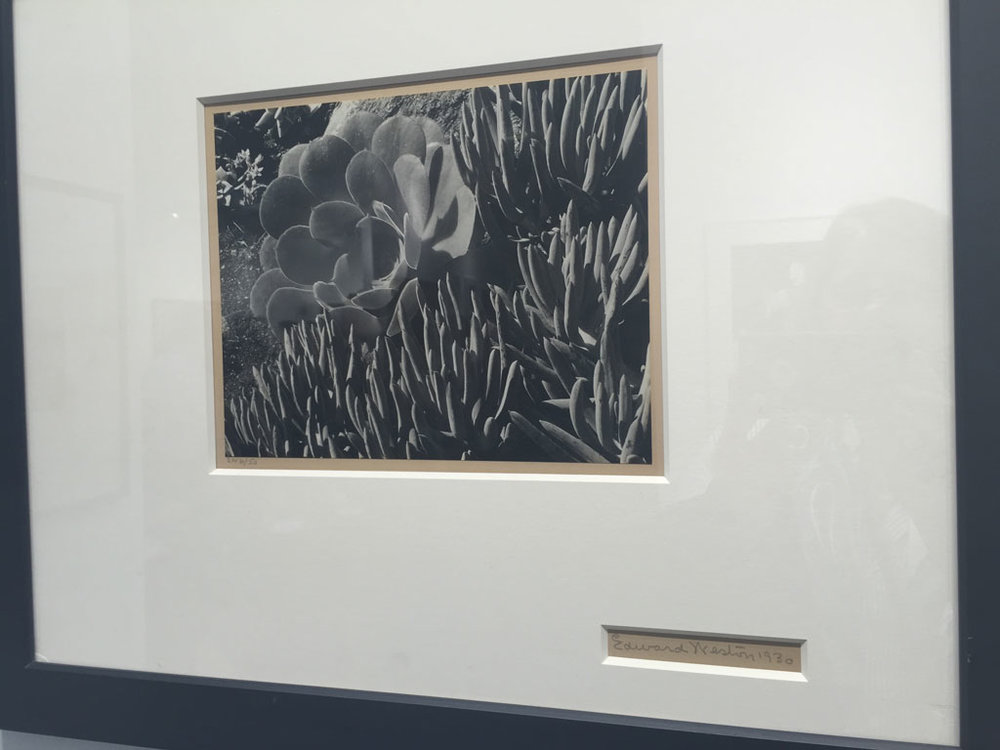 Succulents (1930) - Edward Weston
