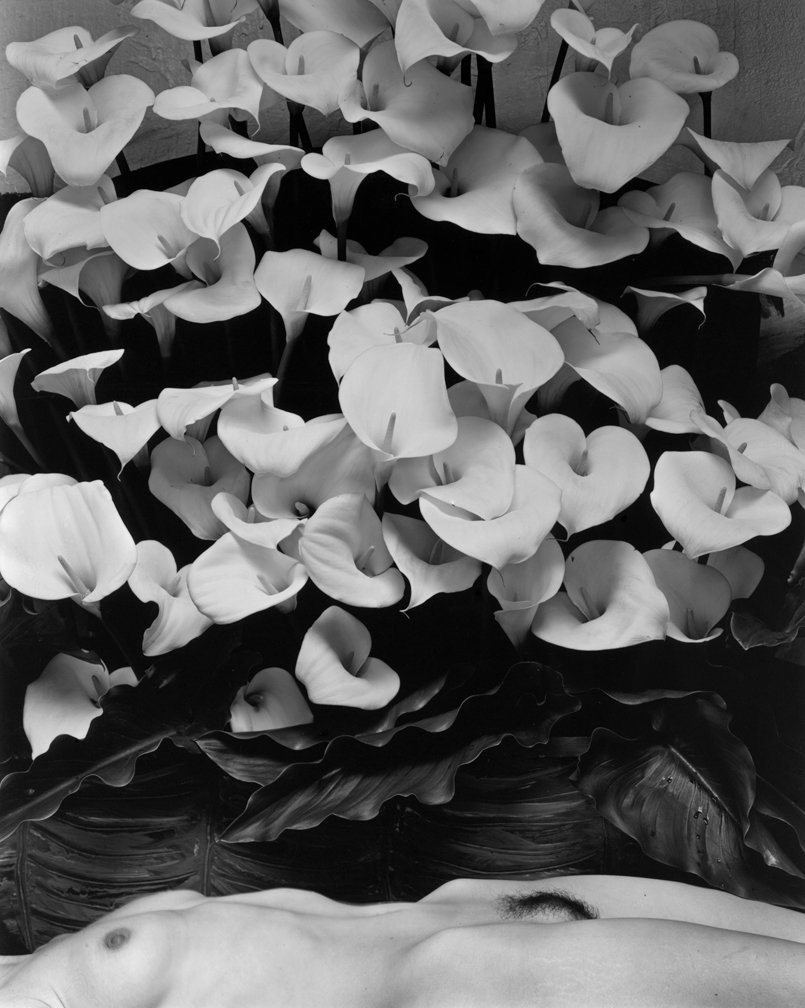 Kim Weston | Nude Lying with Callas