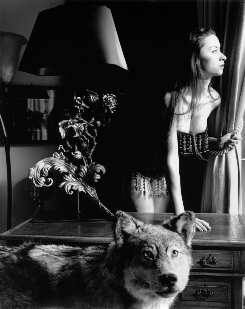 ©Kim Weston | Waiting Wolf