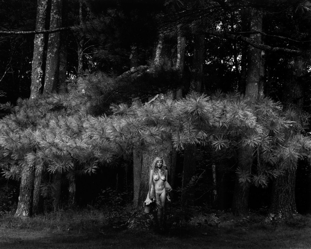 "Kim Weston, ""Phoenician Glade,"" 2017"