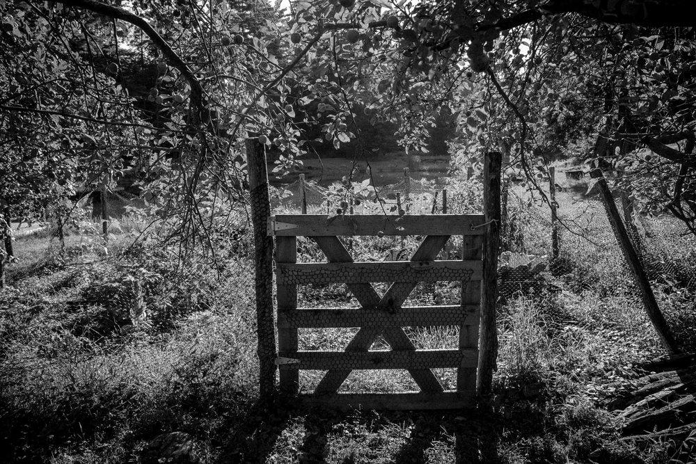 Holz-Weston-1.jpg