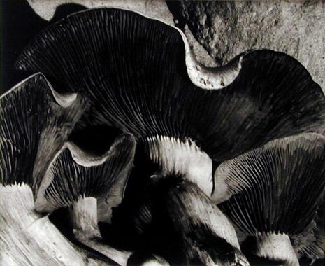 Van-Dyke-Mushrooms.jpg