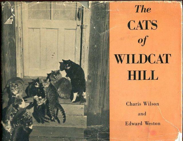 cats of wildcat hill.jpg