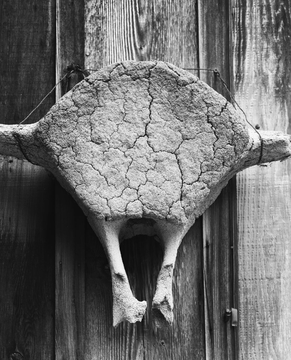 20 Whale Vertebrae, Wildcat Hill, California.jpg