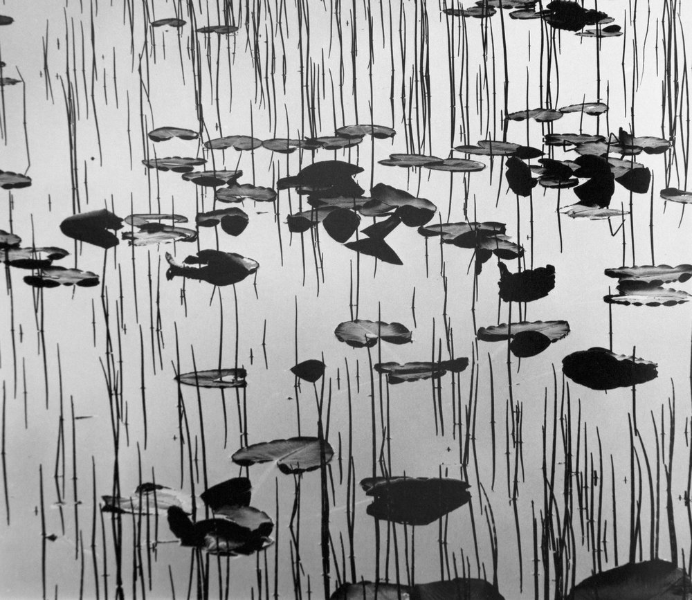 Brett-Weston,-Reeds-and-Lily-Pads,-Alaska,-1973.jpg