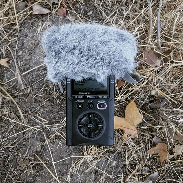 Captured some great field recordings yesterday!