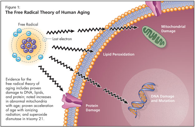 Image Credit: Health Plexus, Theory of Aging