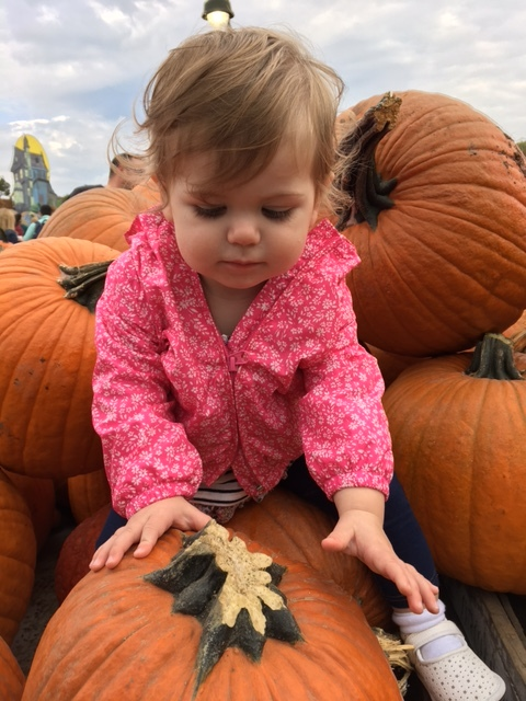 Getting to grips with a pumpkin patch