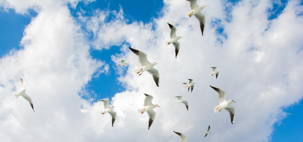 Nikon D7100 24mm f1.8 // Gulls in flight, Istanbul.