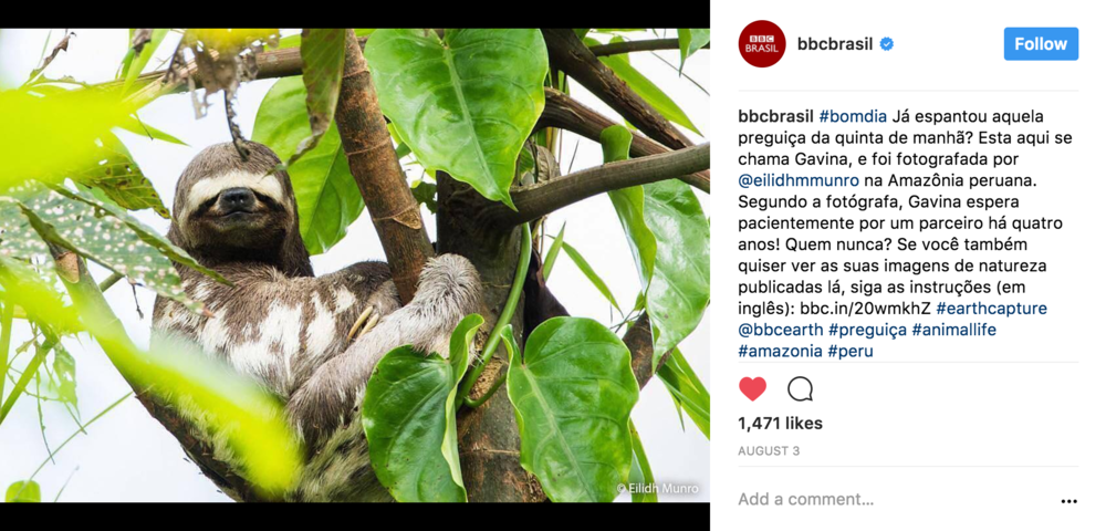 bbc-earth-eilidh-munro-sloth