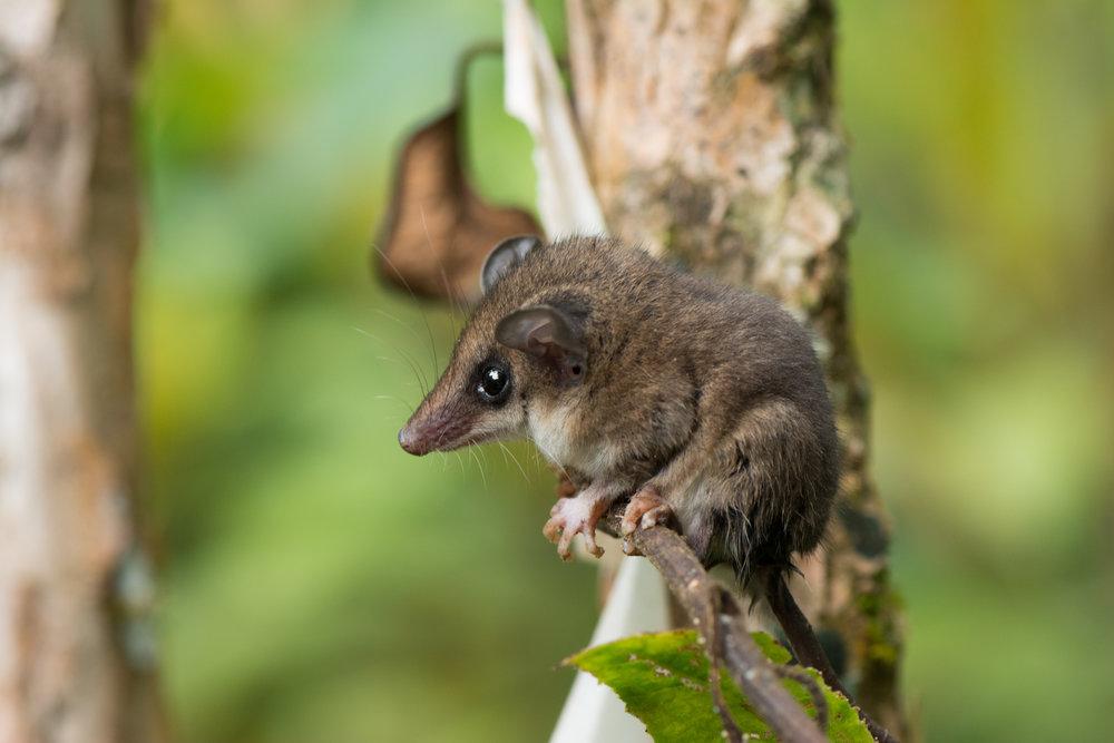 opossum-eilidh-munro