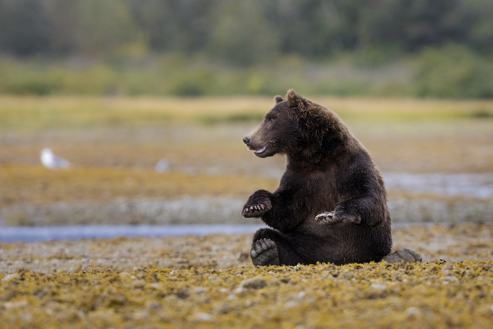 SylerPR_Alaska_1.jpg