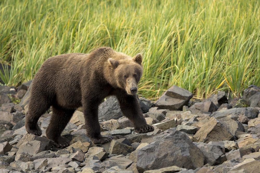 SylerPR_Alaska_4.jpg