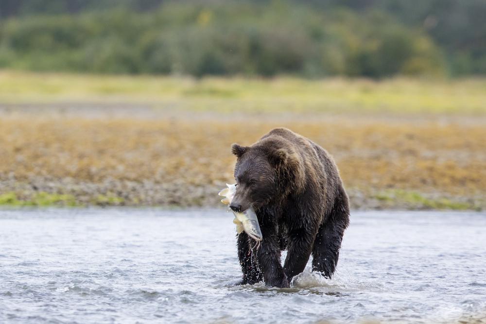 SylerPR_Alaska_9.jpg