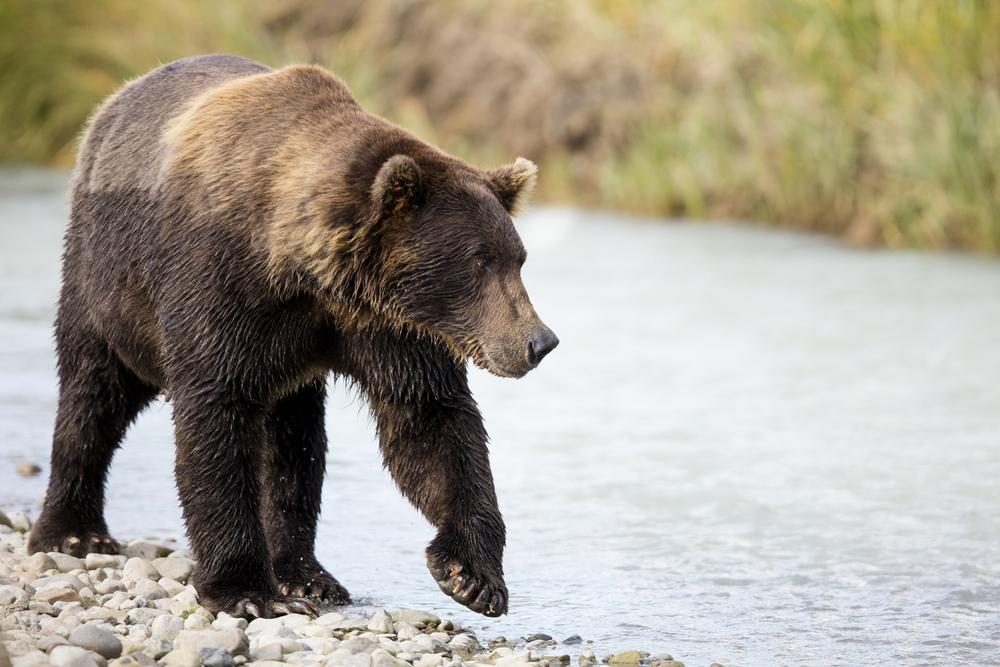 SylerPR_Alaska_11.jpg