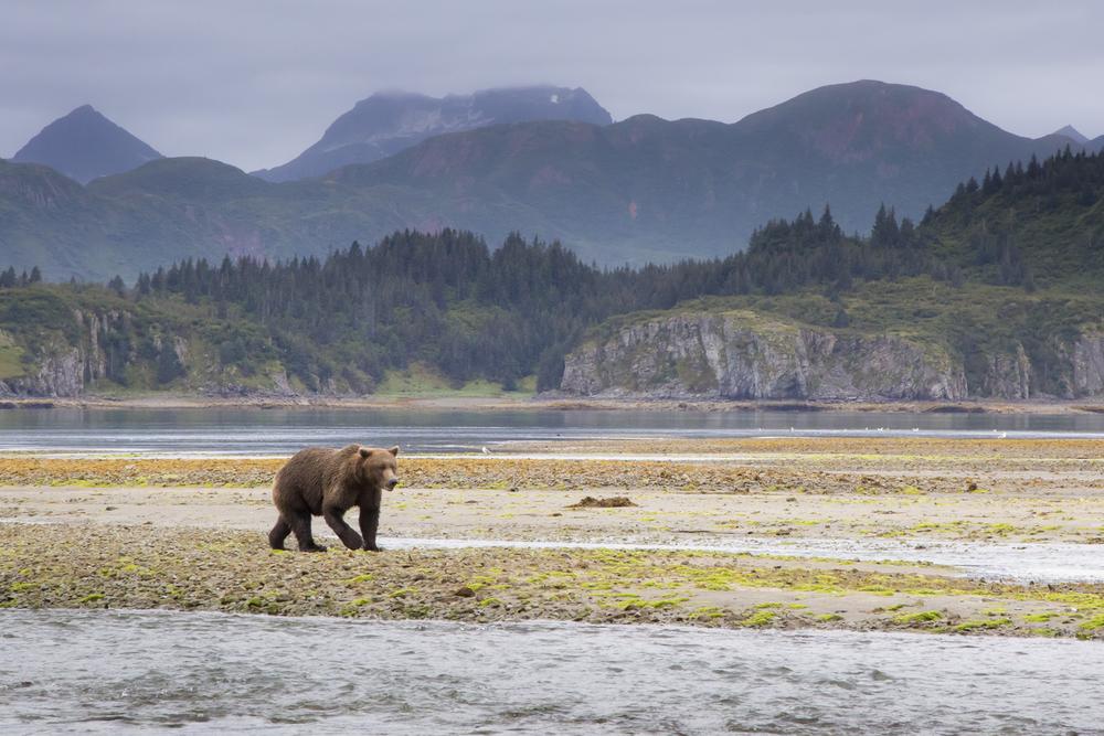 SylerPR_Alaska_13.jpg