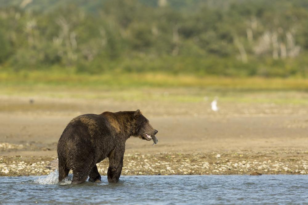 SylerPR_Alaska_15.jpg