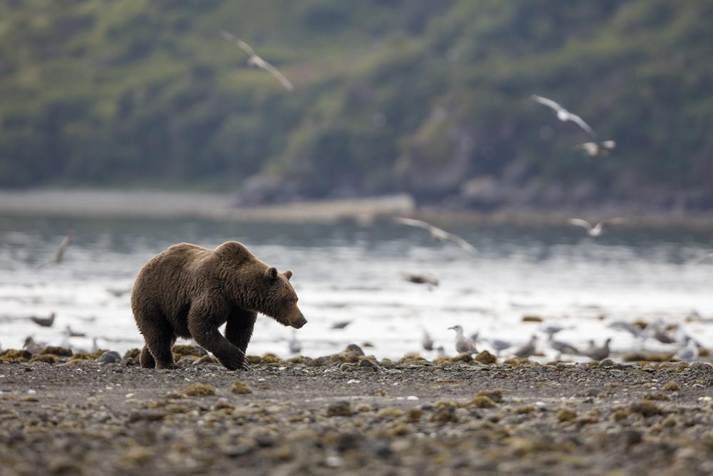 SylerPR_Alaska_21.jpg
