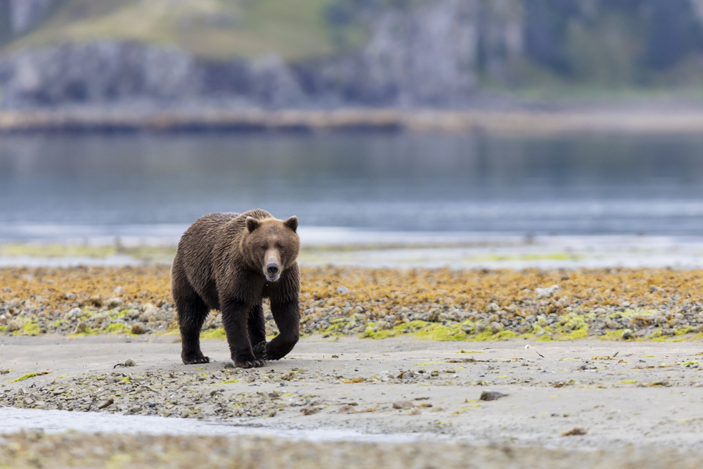 SylerPR_Alaska_23.jpg