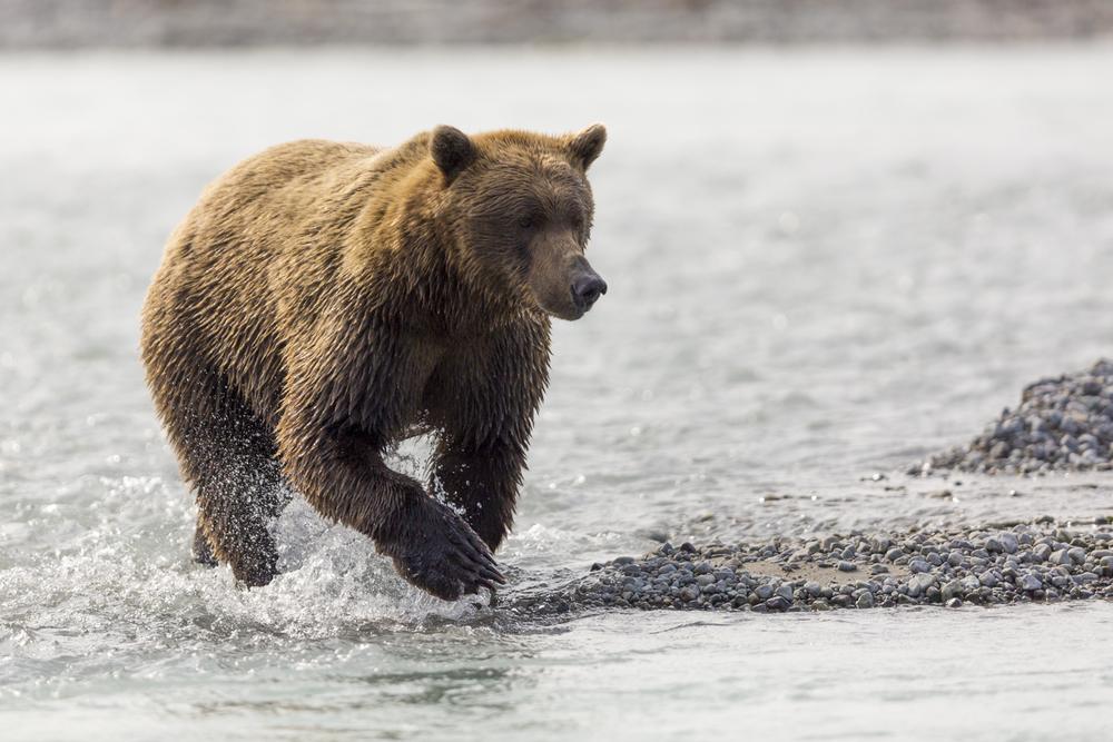 SylerPR_Alaska_27.jpg