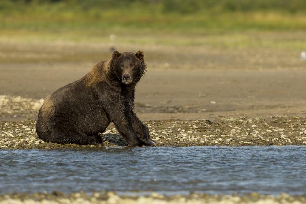 SylerPR_Alaska_30.jpg