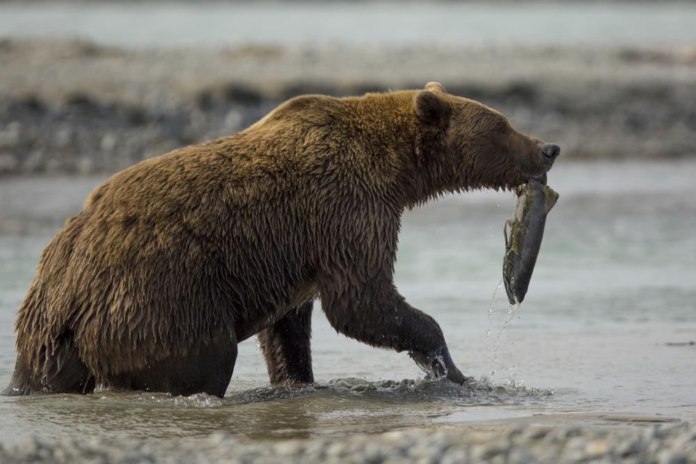 SylerPR_Alaska_32.jpg