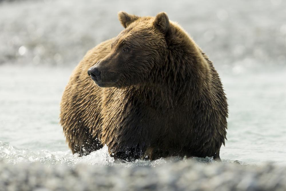SylerPR_Alaska_39.jpg