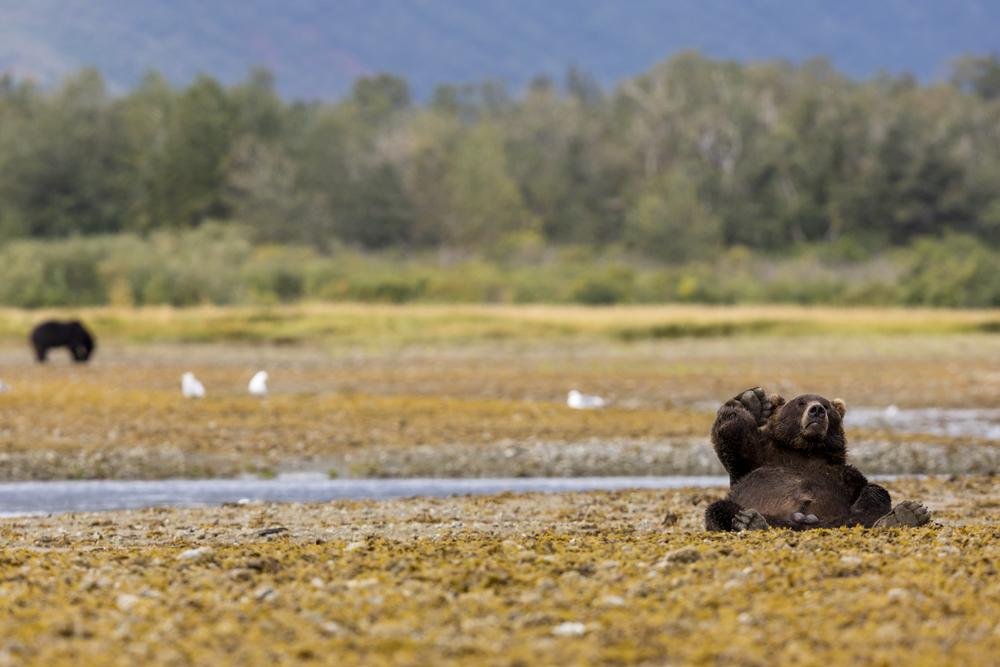 SylerPR_Alaska_42.jpg