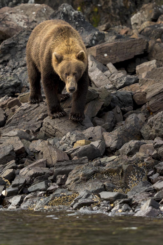 SylerPR_Alaska_46.jpg
