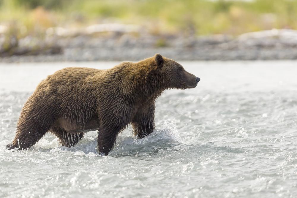 SylerPR_Alaska_48.jpg