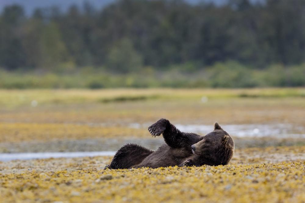 SylerPR_Alaska_51.jpg
