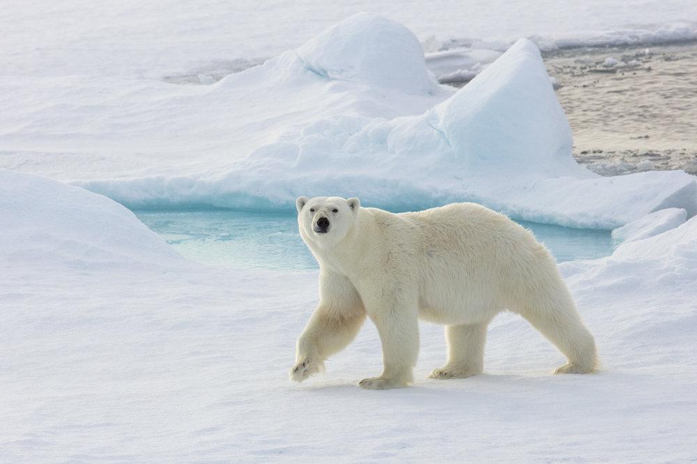 SPR_Svalbard-2.jpg