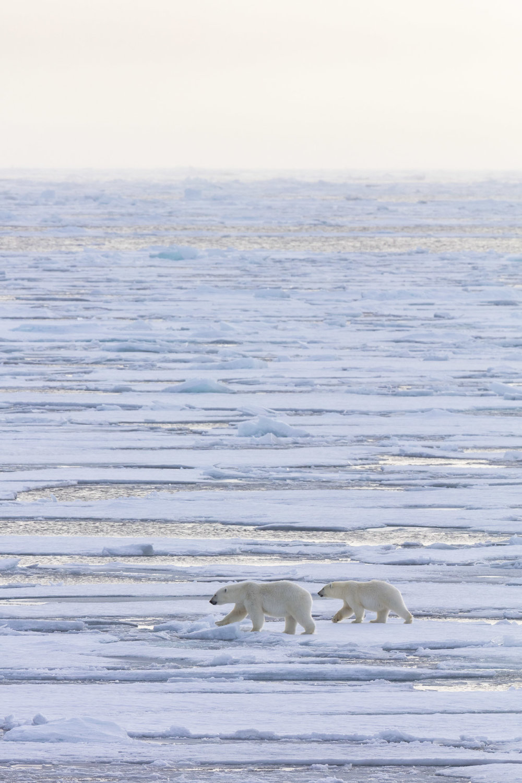 SPR_Svalbard-5.jpg