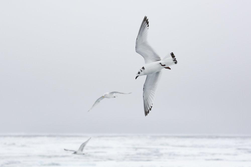 SPR_Svalbard-7.jpg