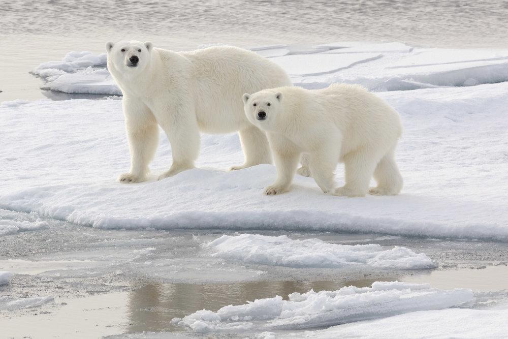 SPR_Svalbard-9.jpg