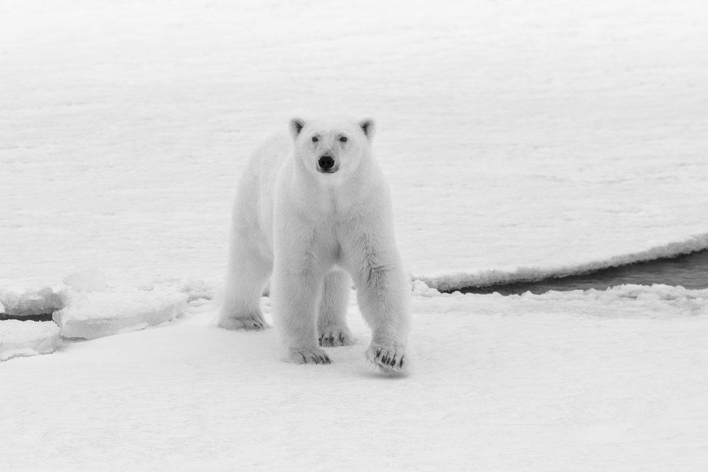 SPR_Svalbard-10.jpg