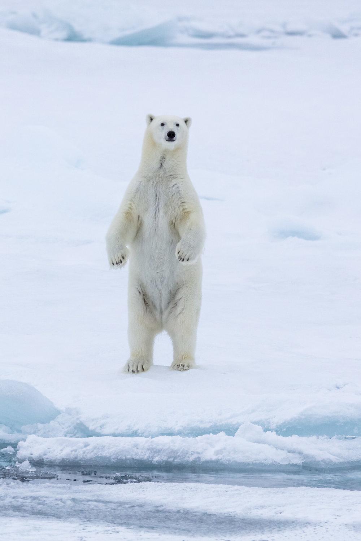 SPR_Svalbard-14.jpg