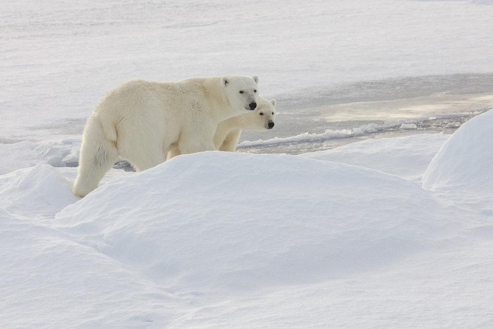 SPR_Svalbard-21.jpg