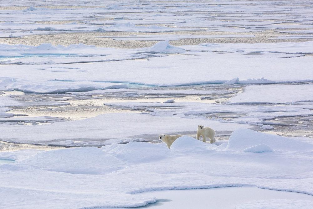 SPR_Svalbard-22.jpg