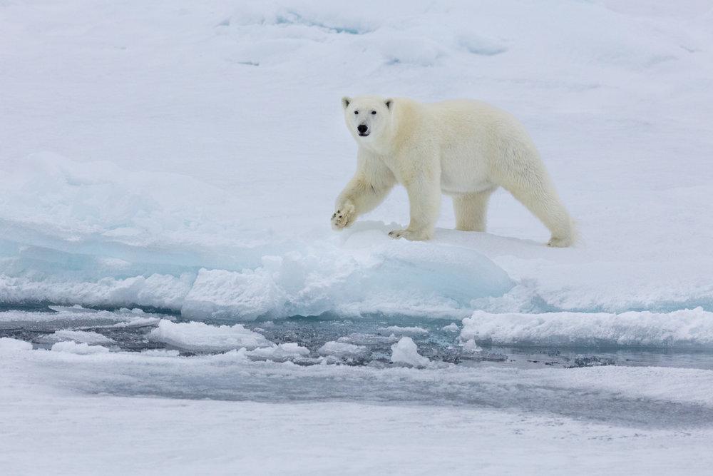 SPR_Svalbard-24.jpg
