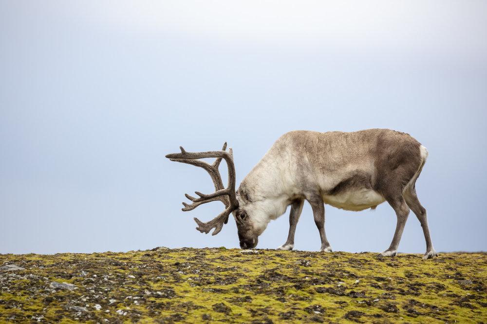 SPR_Svalbard-27.jpg