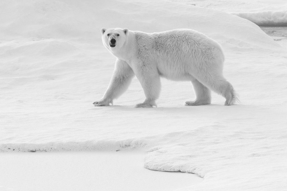 SPR_Svalbard-29.jpg