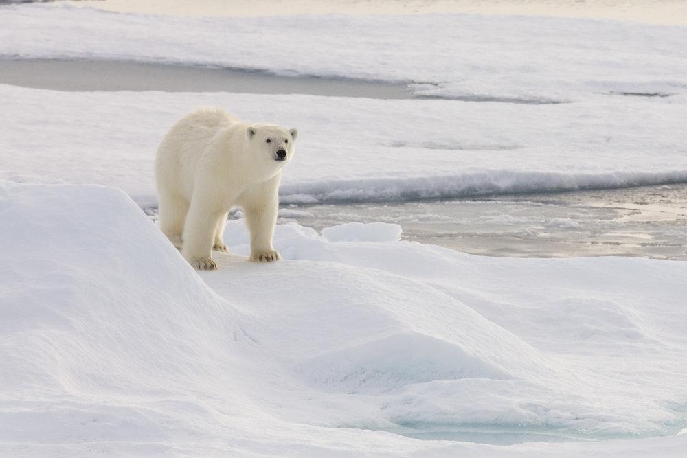 SPR_Svalbard-37.jpg