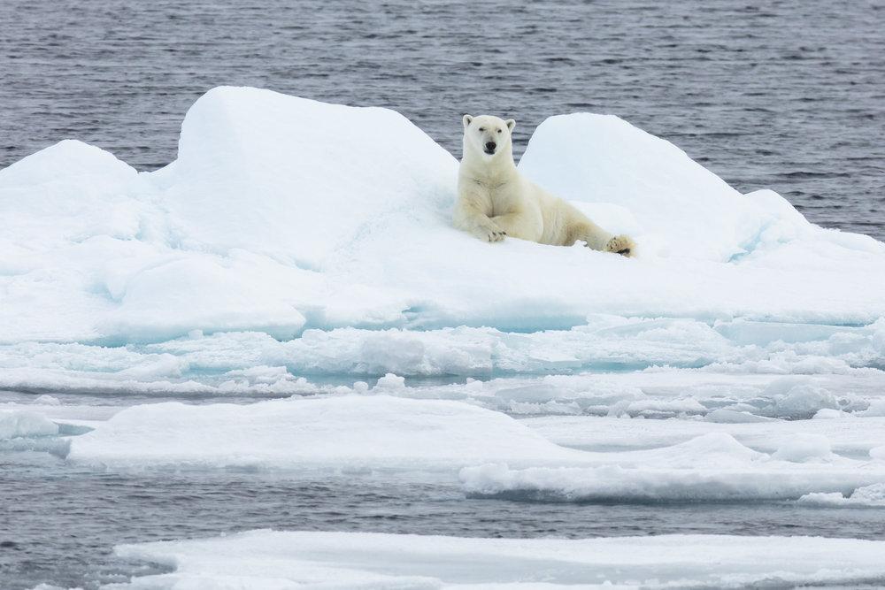 SPR_Svalbard-42.jpg