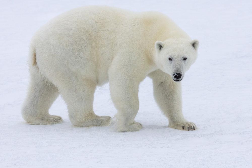 SPR_Svalbard-43.jpg