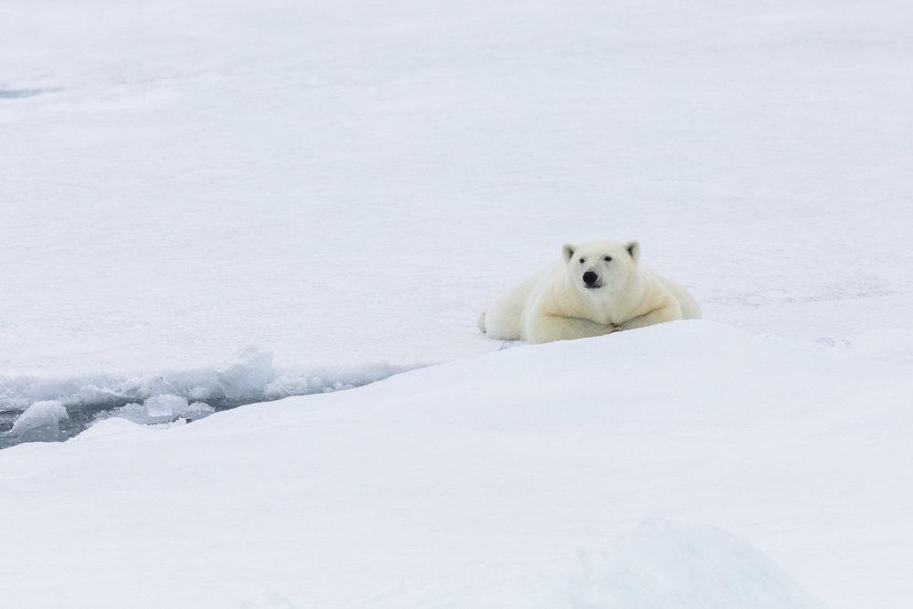 SPR_Svalbard-45.jpg