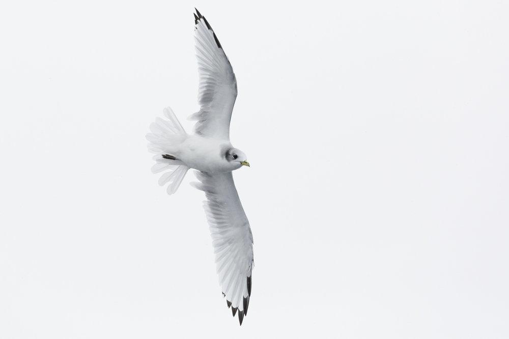 SPR_Svalbard-46.jpg