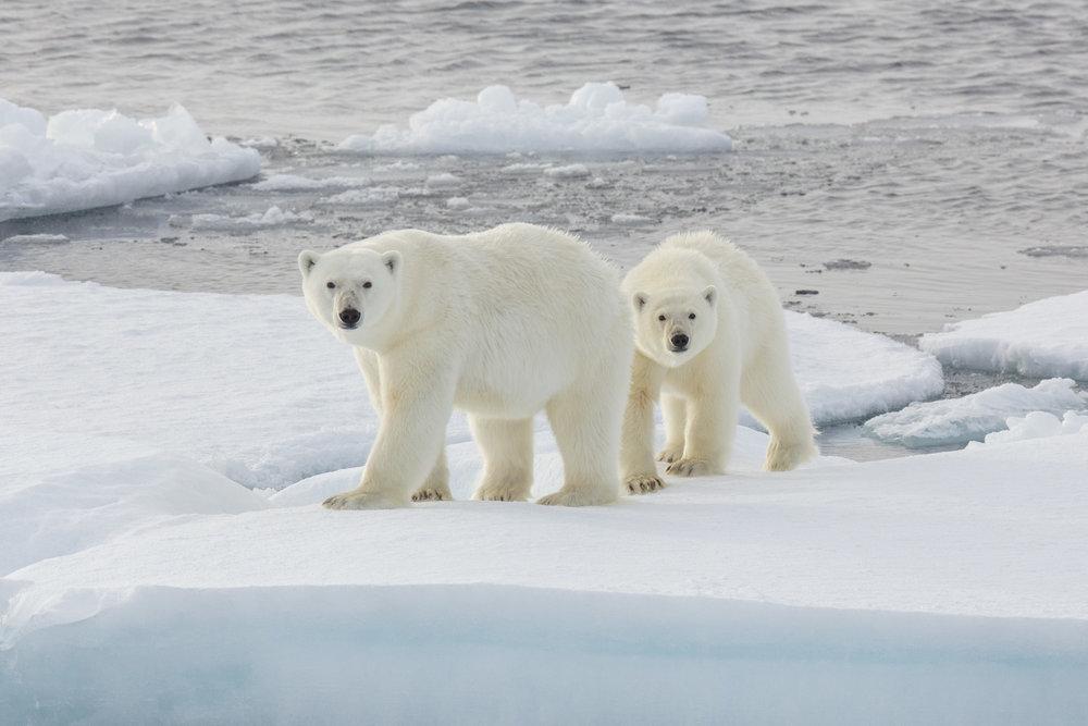 SPR_Svalbard-50.jpg